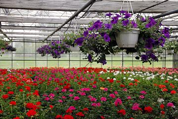 Gartnerei Scharf Beet U Balkonpflanzen