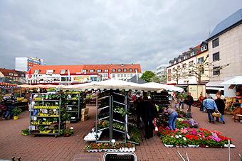 Marktstand der Gärtnerei Scharf auf dem Wochenmarkt in Hanau
